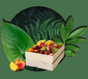 Corbeille de fruits Brâam de taille moyenne
