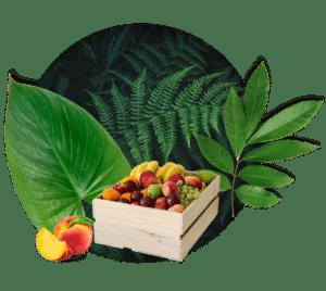 Petit corbeille de fruit Brâam