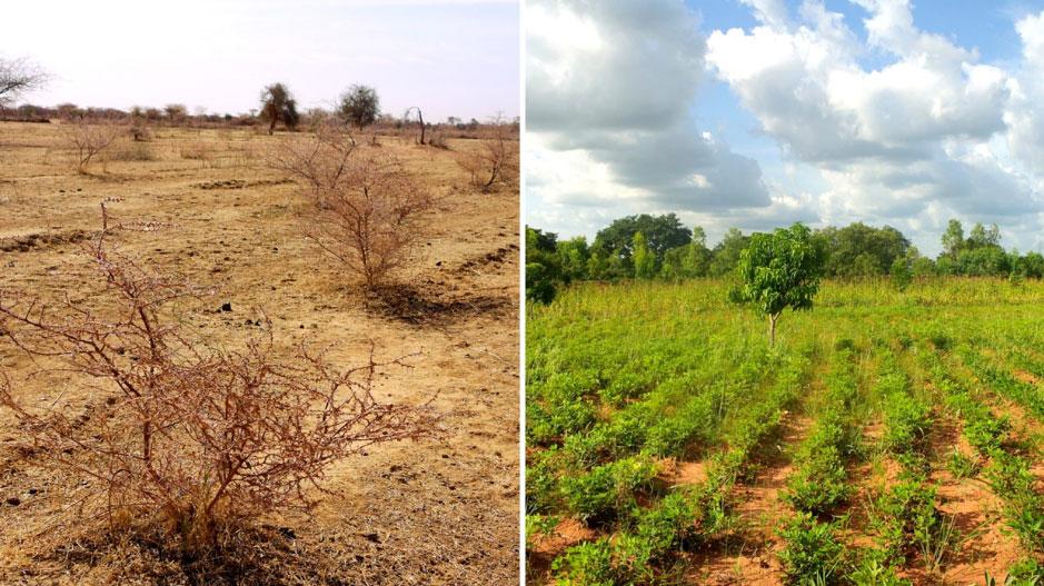 Paysage de champs et sols irrigués