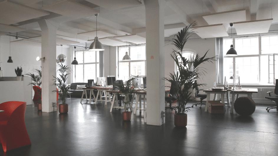 un bureau vide avec des plantes pour la convivialité des collaborateurs