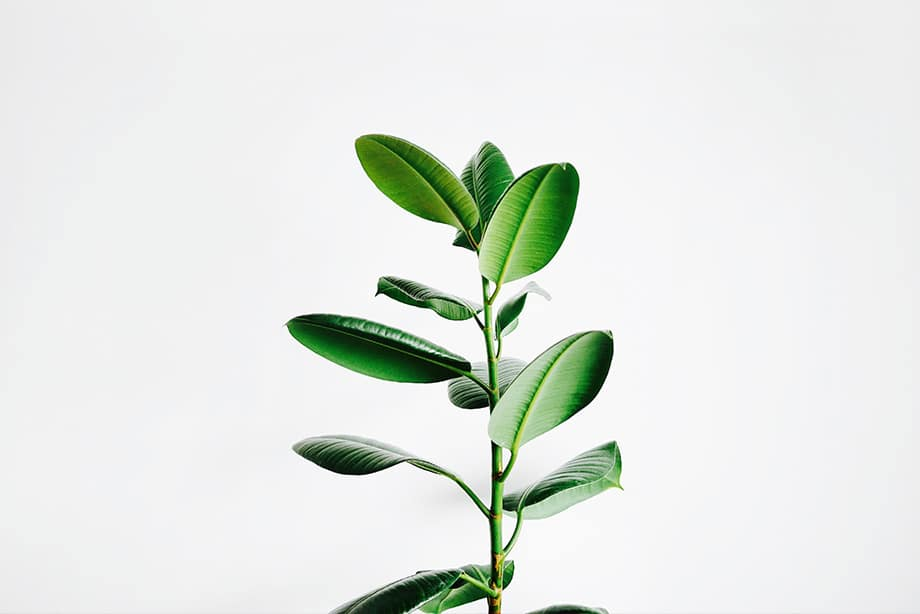 plante qui pousse au soleil