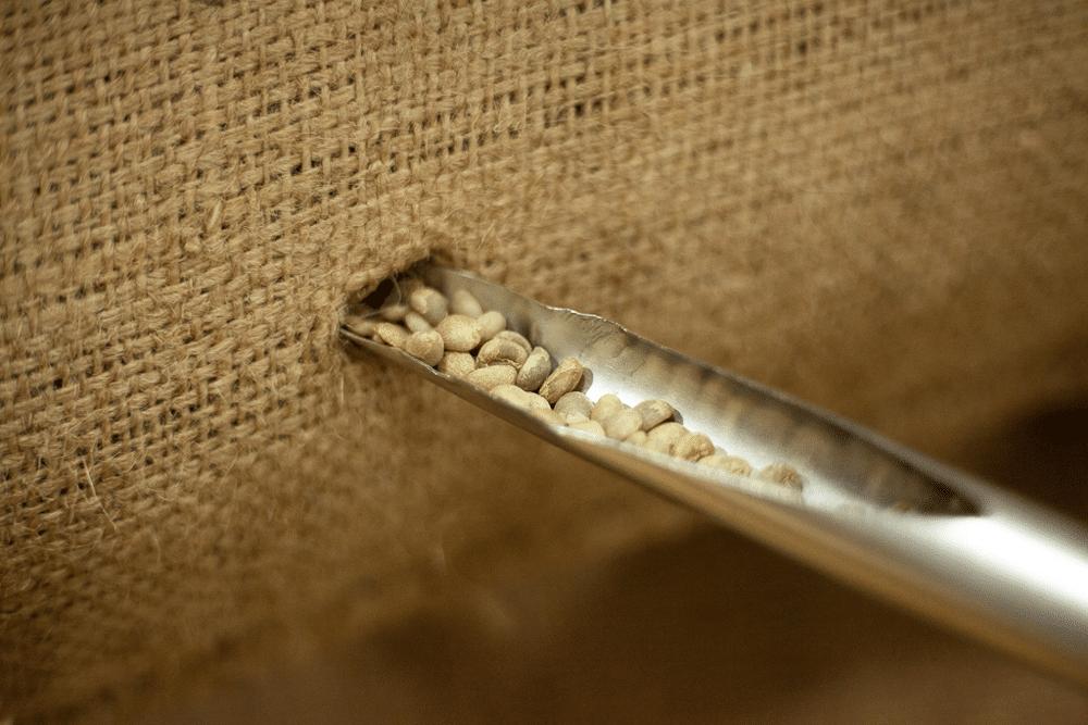 Grains de café vert BRÂAM